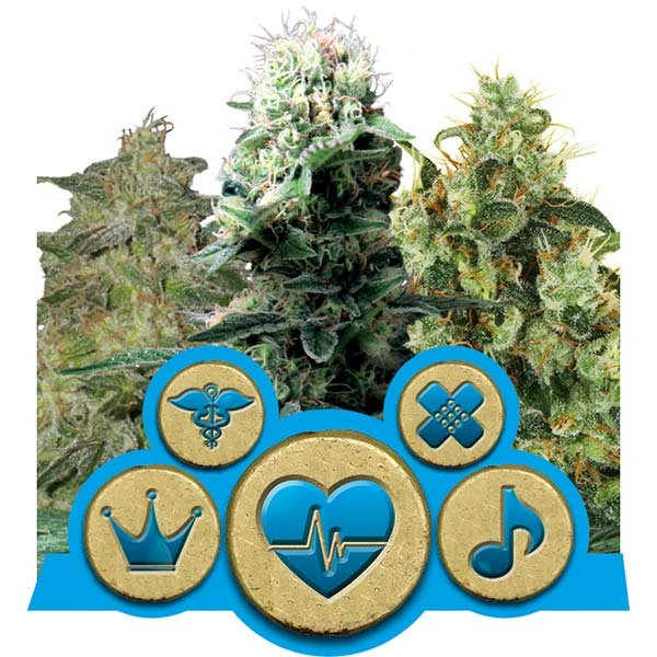 CBD MIX – ROYAL QUEEN
