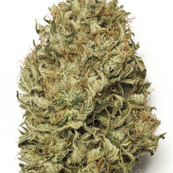 BLUE DREAM AUTO – HUMBOLDT SEED ORG.