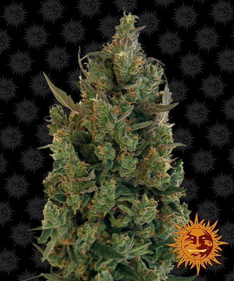 Blueberry Cheese - Barney´s Farm